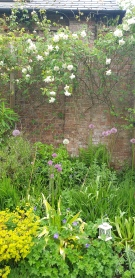 A walled garden and rose wall